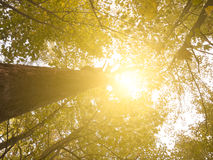 Golden Sun Through Forest Stock Images