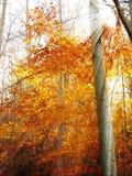 Golden sun rays in autumn forest stock photo