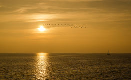 Golden sundown. In nice lake of constance with birds of passage in the horizon Royalty Free Stock Photo