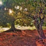 Golden sunlight. The golden sunlight through trees is seen Royalty Free Stock Photos