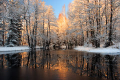 Golden sunlight reflection. Brilliantly golden sunlight reflecting in river in Wintry Royalty Free Stock Images