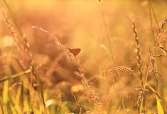 Golden sunlit meadow at sunset Stock Photography