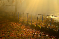 Golden sunrays  shining down on A autumn day In hampstead london Stock Photos