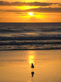 Golden Sunrise. This image was taken on the beach just north of surfers paradise, on the gold coast stock photography