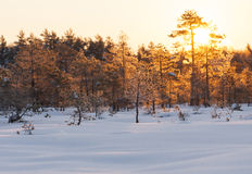 Golden sunrise behind forest Stock Photo