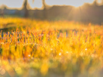 Golden sunrise and dew filled grass Royalty Free Stock Photos