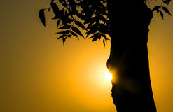 Golden sunrise. Early morning golden sunrise against tree forming beautiful silhouette Stock Images