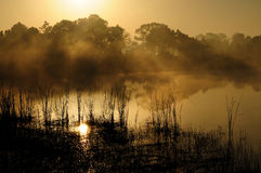 Golden sunrise haze. Reflected trees also cast their shadows through the haze on Marl Pond 3 at the Babcock Webb Wildlive Management Area near Punta Gorda FL Royalty Free Stock Photo