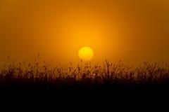 Golden Sunrise Stock Images
