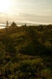 Golden sunrise light over forest Stock Images