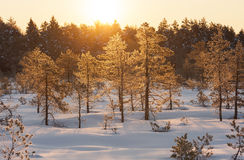 Golden sunrise in marsh at winter in Estonia Royalty Free Stock Photography