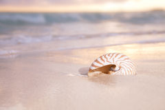 Golden sunrise and nautilus shell in the sea Stock Image