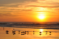 Golden sunrise over the beach and crashing waves. With seabirds in the foreground stock photography