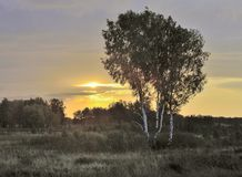 Golden sunrise over a meadow with birch royalty free stock photo