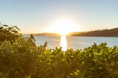 Golden Sunrise Over Ocean In New Zealand. Sun just over the horizon shines brilliantly over ocean and native trees Royalty Free Stock Images