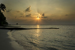 Golden sunrise and palm silhouette on the horizon. Golden sunrise and palm silhouette on the morning horizon on the island of Maldives Stock Images
