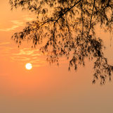 Golden sunrise with silhouette pine leaf Stock Images