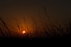 Golden Sunrise with Silhouetted Plants Stock Photos