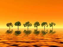 Golden sunrise. Trees Stock Photo