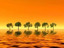 Golden sunrise. Trees Stock Photo