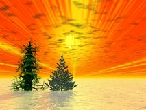 Golden sunrise. Two fir trees stock images