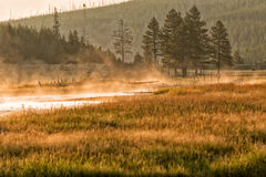 Golden sunrise in Yellowstone river Stock Image