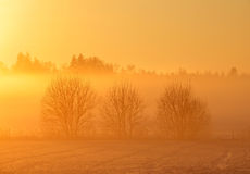 Golden sunset. A late winter sunset over rural surroundings Royalty Free Stock Photos