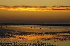 Free Golden Sunset Stock Photos - 1561763