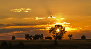 Golden sunset Stock Images
