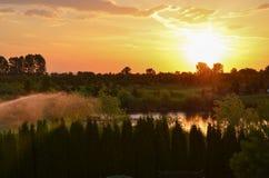Golden sunset above summer lake Stock Image