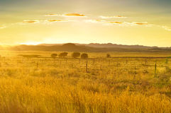 Golden sunset in African savannah Stock Photo