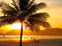 Golden sunset on the beach. Beautiful golden sunset on the beach of the city of santos in brazil stock image