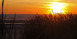 Golden Sunset at the Beach Royalty Free Stock Image