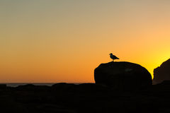 Golden sunset at Curio Bay Royalty Free Stock Photos