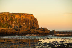 Golden sunset at Curio Bay. The Catlins, New Zealand Royalty Free Stock Photo