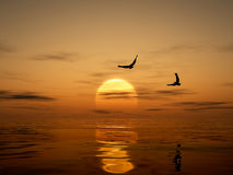 Golden Sunset with Eagles. Eagles flying over the ocean Royalty Free Stock Photos