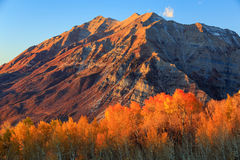 Golden sunset and fall color. Stock Image