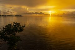 Gold sunset Florida Keys. Golden sunset in the Florida Keys ocean waters with mangroves in foreground royalty free stock photos