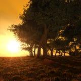 Golden sunset forest stock image
