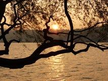 The golden sunset Stock Photo