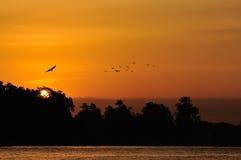 Golden Sunset stock images