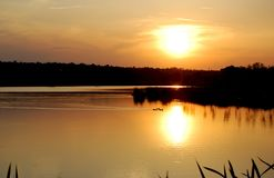 Golden sunset at the lake. Beautiful sunset at the lake with calm water and ducks in it stock photography