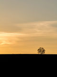 Golden sunset in landscape with silhouette of solitaire tree Stock Image