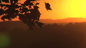 Golden sunset and leaves stock footage