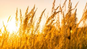 Golden sunset in mid summer royalty free stock photos