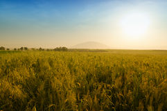 Golden sunset on the mount Tabor Royalty Free Stock Images