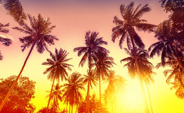 Golden sunset, nature background with palms Stock Images