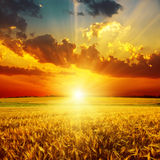 Golden sunset over field Royalty Free Stock Photo