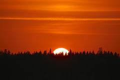 Golden sunset over a forest silhouette Royalty Free Stock Photography