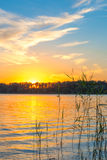 Golden sunset over the lake Stock Image